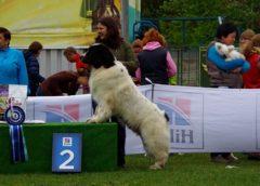 Малаховка. Региональная выставка собак